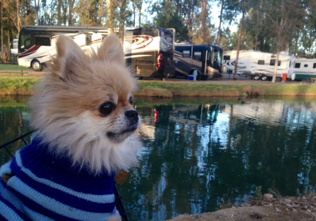 IT'S A DOGS LIFE – TIPS FOR RVING WITH YOUR DOG